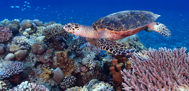 Image of Sea Turtle in Key West